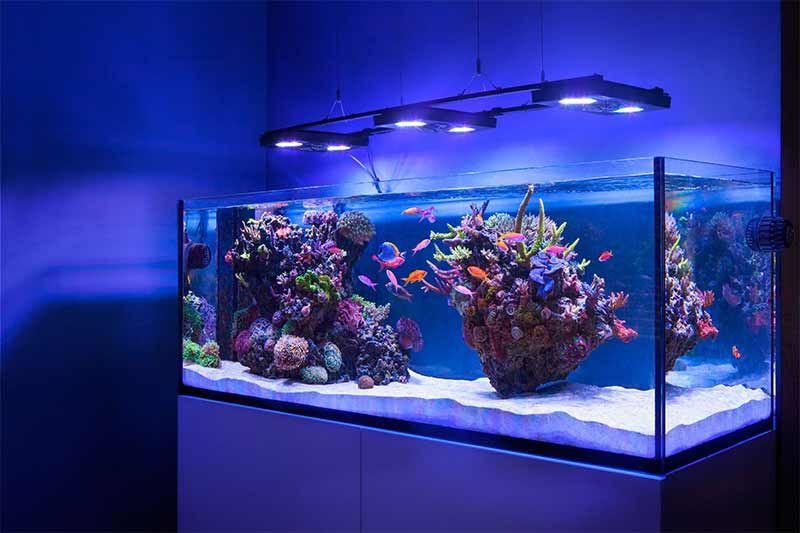 how to buy a new aquarium