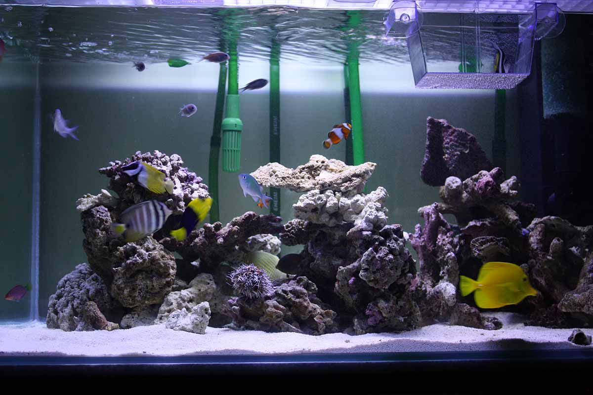 what do I need for a saltwater aquarium