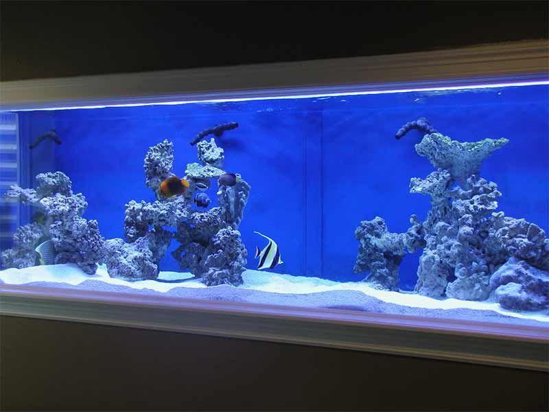saltwater aquarium setup and tips for beginners