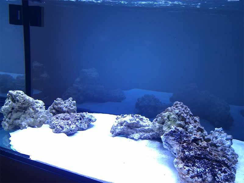 live sand for saltwater aquariums