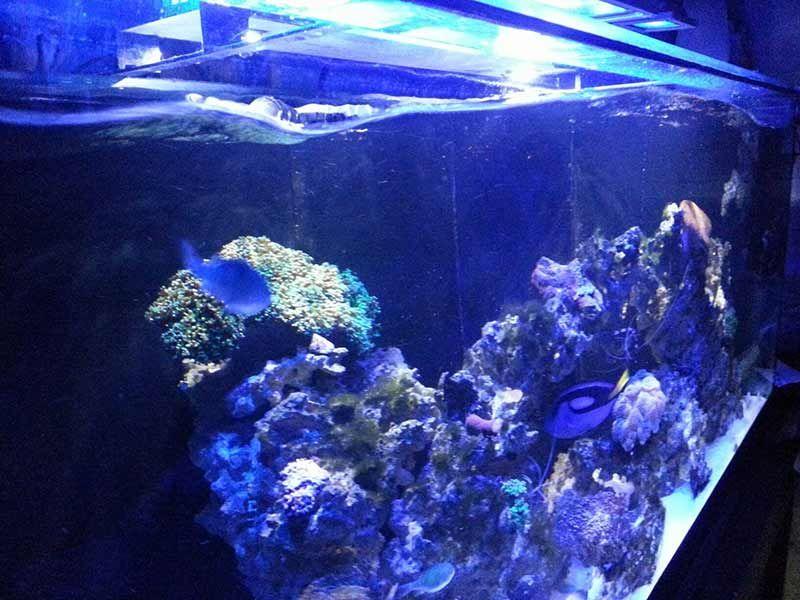 Best Aquarium Wave Maker
