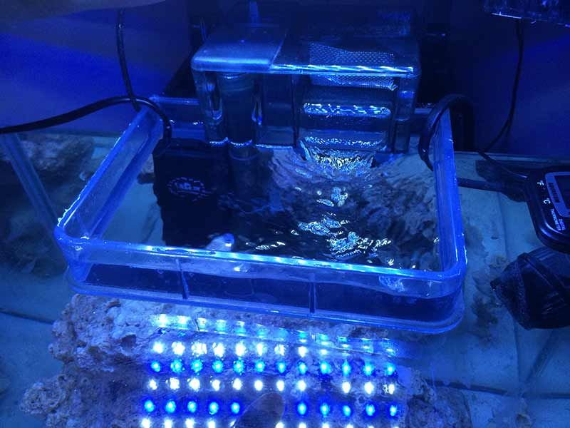 Best Saltwater Aquarium Heater