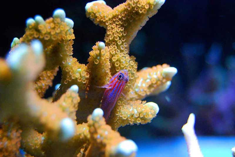 how to cycle a saltwater tank faster