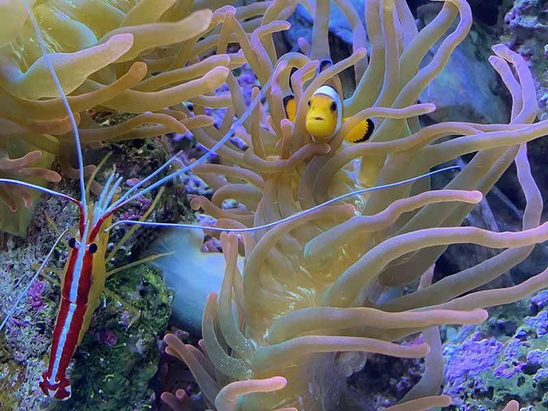 best saltwater fish for 30 gallon tank