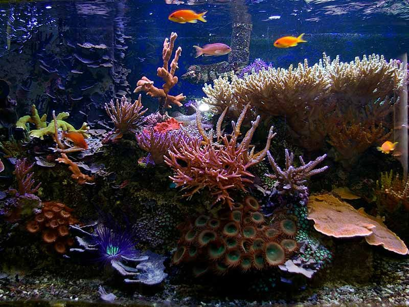 how much flow in a reef tank