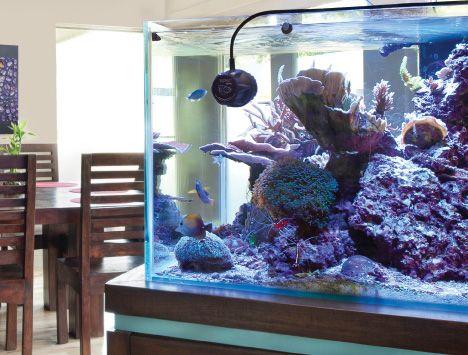 best flow pattern reef tank