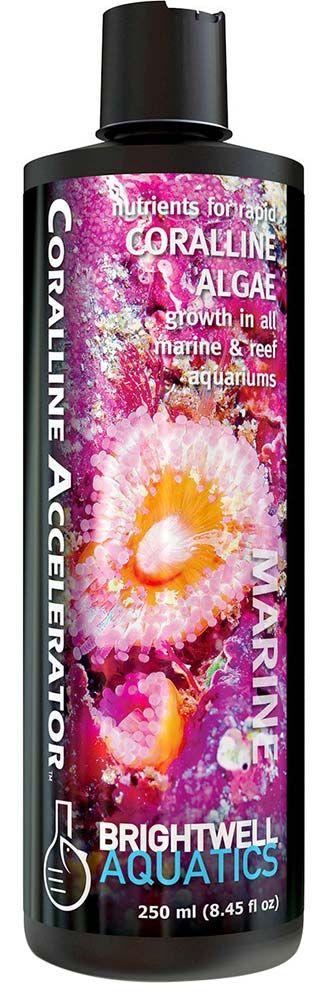 Brightwell Coralline Accelerator