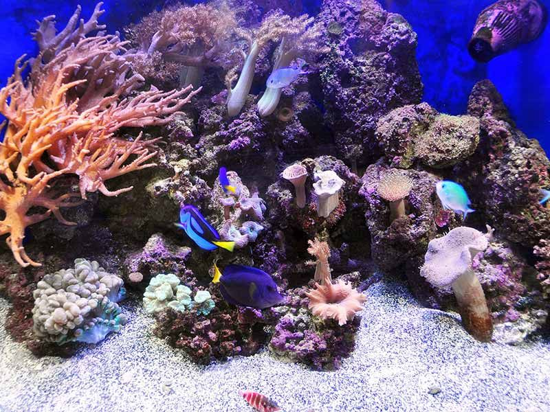 reef tank alkalinity