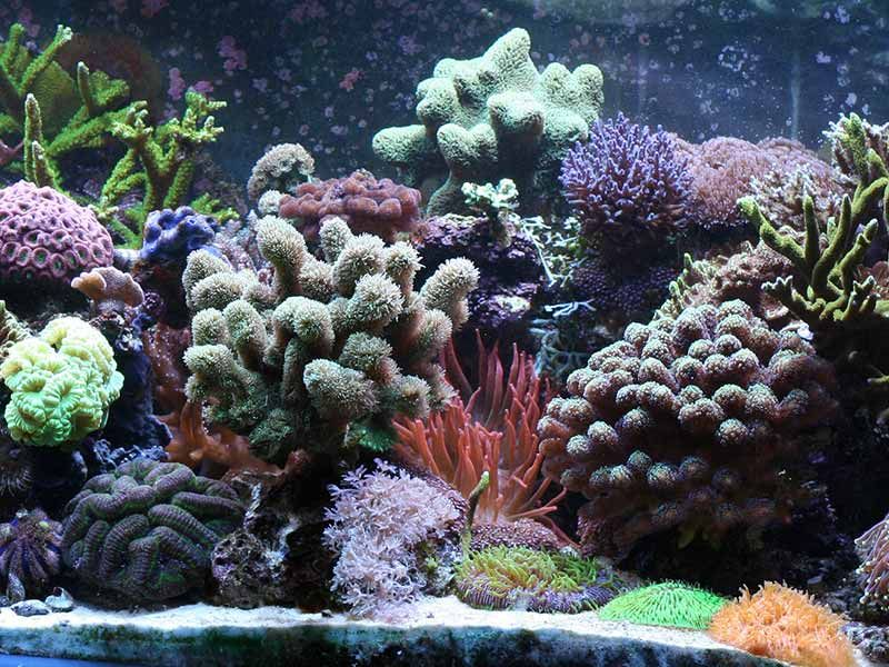 coral only tank